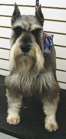 Dog - Discover a grooming shop in Greenwood, Indiana, that performs ear cleaning, bathing, and shampooing for your dog or cat.
